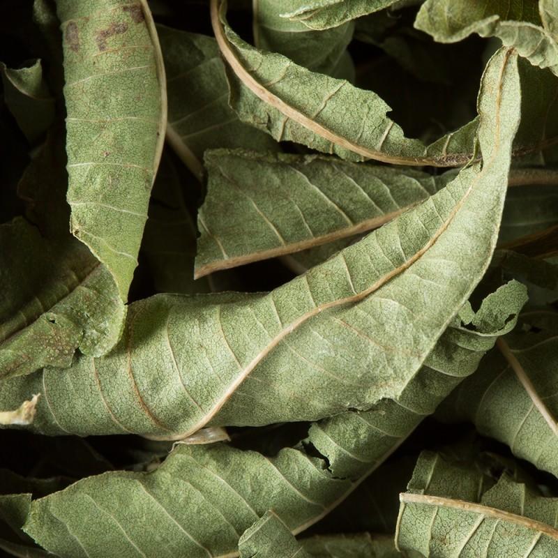 Zeliščni čaj Dammann Verveine, čajni lističi